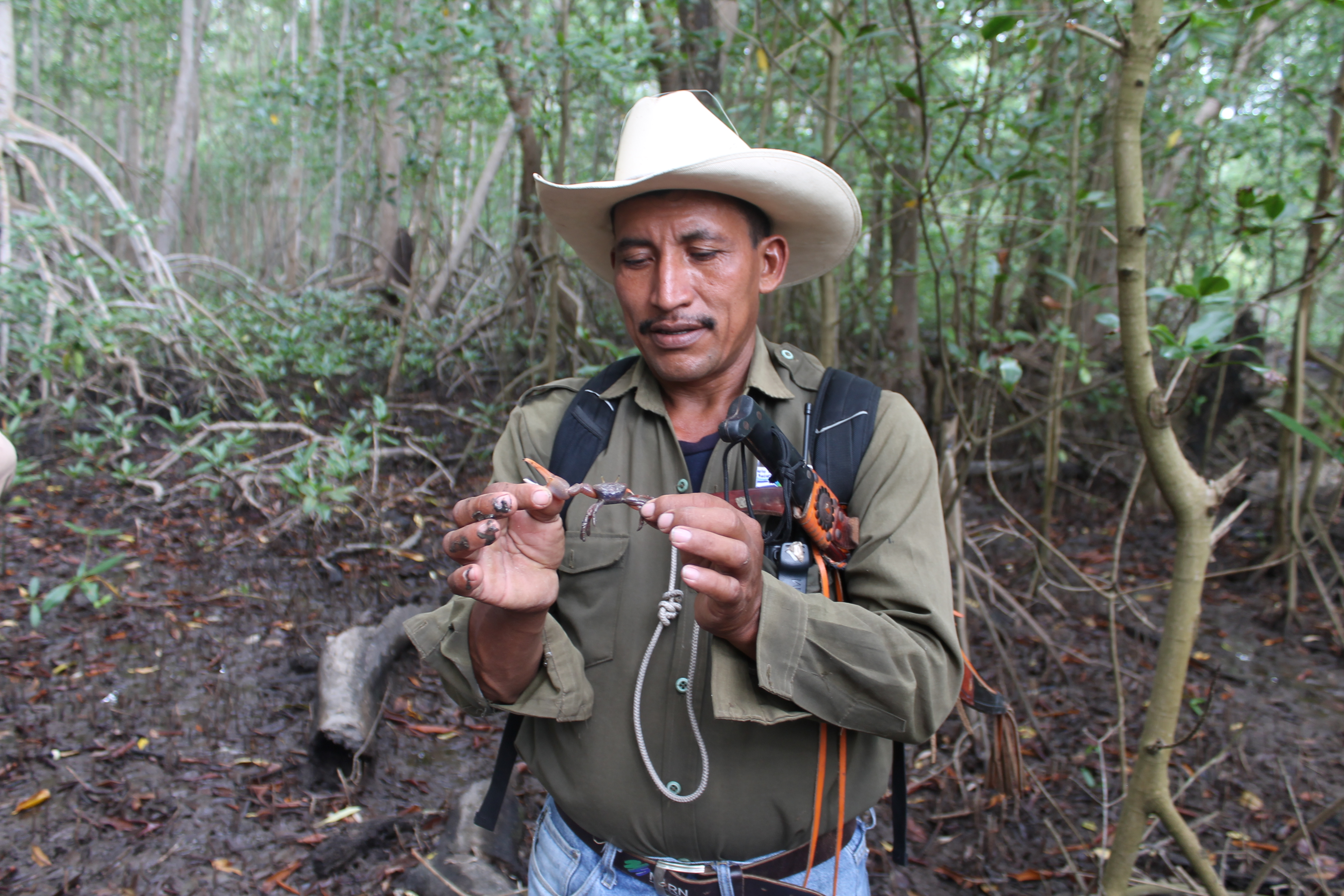Mongabay: Communities Band Together to Protect El Salvador's Last Mangroves